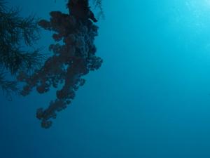 Dive the USAT Liberty - Shipwreck Dive Photos