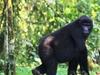 Primate Safaris with Gorilla Tracking