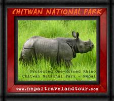 Nepal Chitwan Rhinol