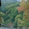 Mt. Pelion Forest