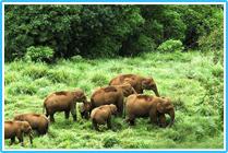 Thekkadi Periyar Kerala Tourism