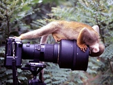 Cameramonkey