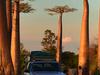 Fb Baobab3