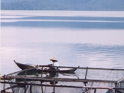 Fisherman On Lake Maninjau