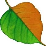 Mystikal Leaf