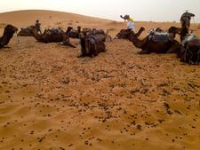 Parking Camels
