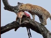 Serengeti Nationla Park