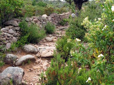 Ancient Path At Araghju