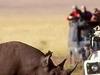 Photo   Game Drive Rhino