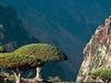 Socotra Island , Yemen