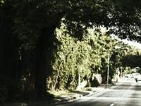 Balete Drive