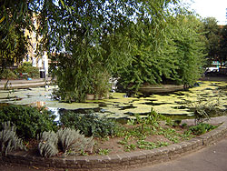 Another View Of Clapton Pond