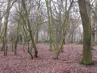 Typical View Of Oxleas Wood
