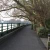 Embankment Walkway, Bishops Park