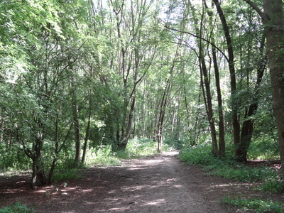 Path In Covert Way Woodland