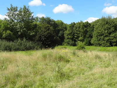 Pasture Area In Covert Way