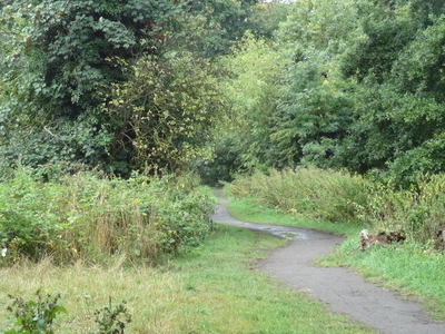 Path In Crane Park