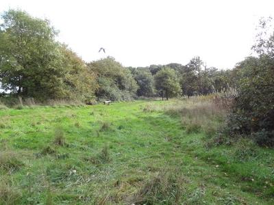 Cranham Marsh