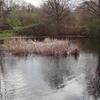 Cranmer Green Pond
