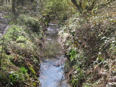 Kyd Brook In Crofton Wood