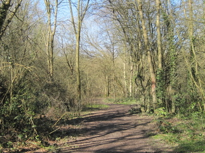 Path In Crofton Wood