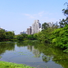 Daan Park Ecological Pool West Zone