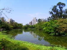 Daan Park Ecological Pool West Zone