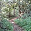 Path In Denham Lock Wood