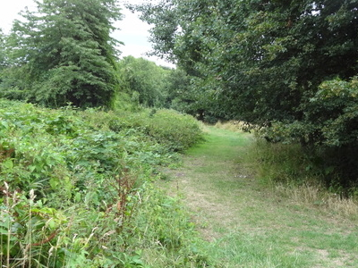 Path In Elmbridge Open Space