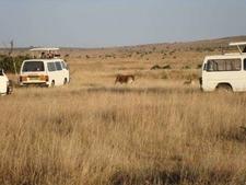 Game Drive In Masai Mara National Reserve