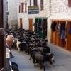 Goats In Marpha