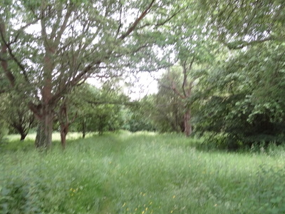 Harrow Weald Common Pasture Area