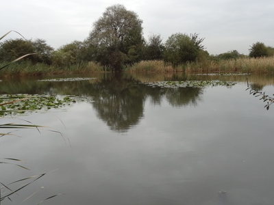 Hooks Hall Pond, The Chase Nature Reserve