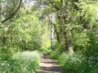 Jubilee Wood