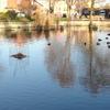 Lavender Pond