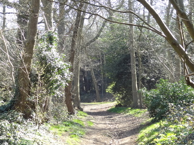 Lesnes Abbey Woods