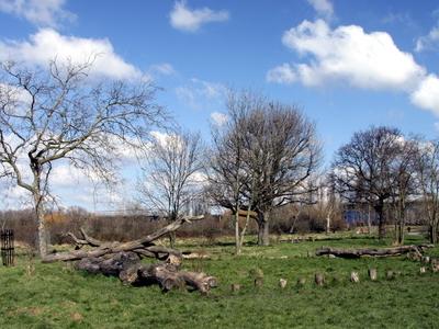 Little Wormwood Scrubs In Spring