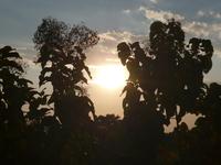 Sunset View At Murti Dooars
