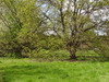 Pevensey Road Nature Reserve