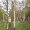 Ripple Nature Reserve Silver Birch Wood