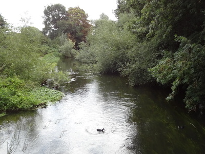 The River Colne In Denham Country Park