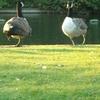 Southwark Park Pond