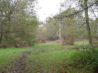 Stanmore Common