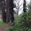 Sutton Ecology Centre Grounds