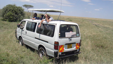 Tourist Having Game Drives With A Tour Van