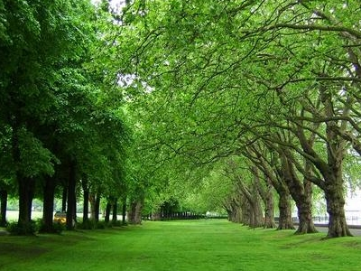 Trees In Wandsworth Park