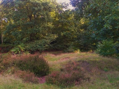 Tumuli Or Burial Mound In Abbey Wood