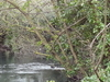 The River Wandle With Wilderness Island