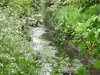 Yeading Brook In Ten Acre Wood