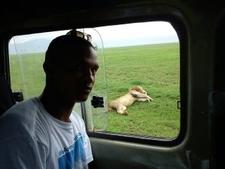 Same Lion Sleeping